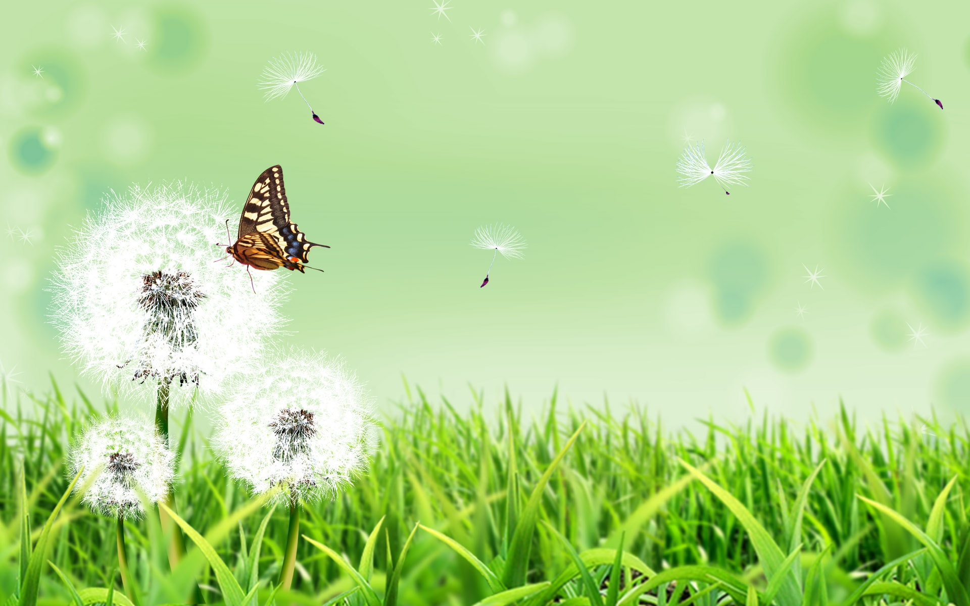 downloadfiles_wallpapers_1920_1200_butterfly_nature_5350